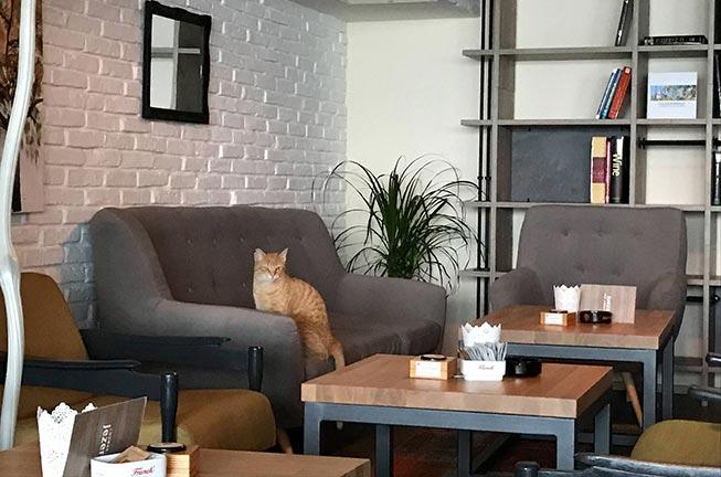 Savršeno mjesto za odmor i kavu